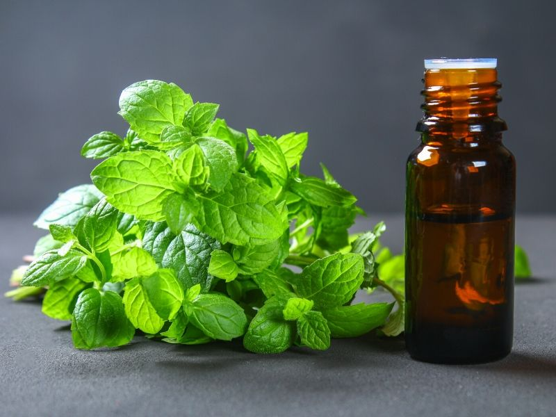 Peppermint leaves and essential oill bottle
