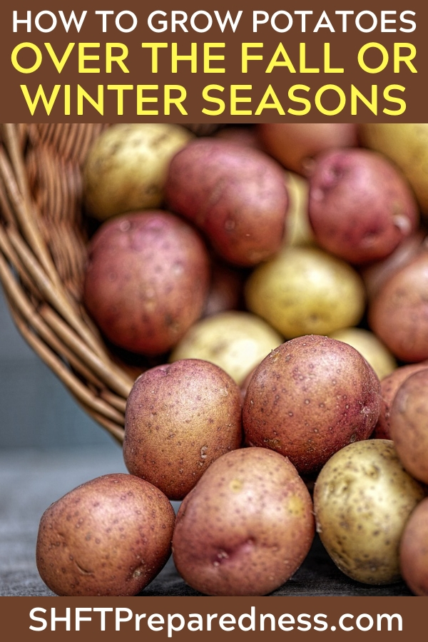 How To Grow Potatoes Over The Fall Or Winter Seasons — Did you know you can grow potatoes over winter? I didn't. Some even say planting in fall is better than the spring. I need to try this out.