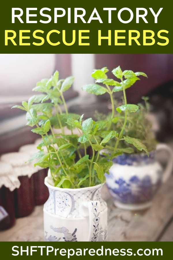 Respiratory Rescue Herbs - Not only is this a great article written by a published practitioner of herbal remedies but there is also a podcast to go along with it. This means you will get the full story on herbal remedies for the respiratory system. If you are suffering or if you have someone in your fmaily suffering from respiratory issues this information is critical.