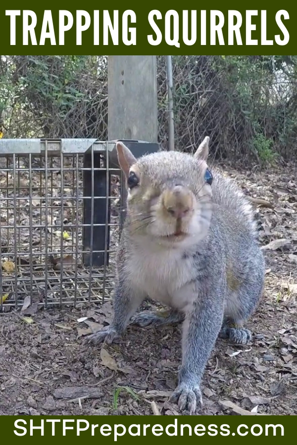 How to Skin and Cut Up a Squirrel in 9 Steps - This great article offers up the entire breakdown of a squirrel in 9 easy steps. You will see that this is a much easier process than you thought. The paths between joints and through tendons require a little knowledge and a sharp knife.