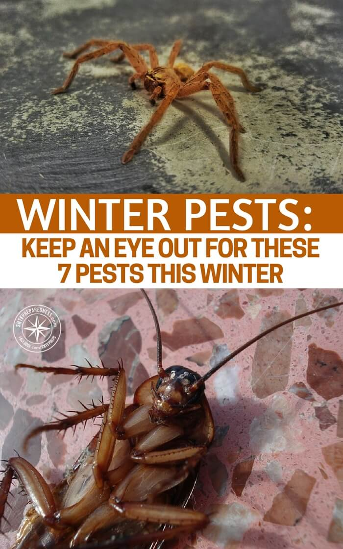 Winter Pests: Keep an Eye out for These 7 Pests This Winter - While most people associate spring and summer to pest control season, you'd be surprised to know the number of pests that target your home for warmth and comfort during the winter.