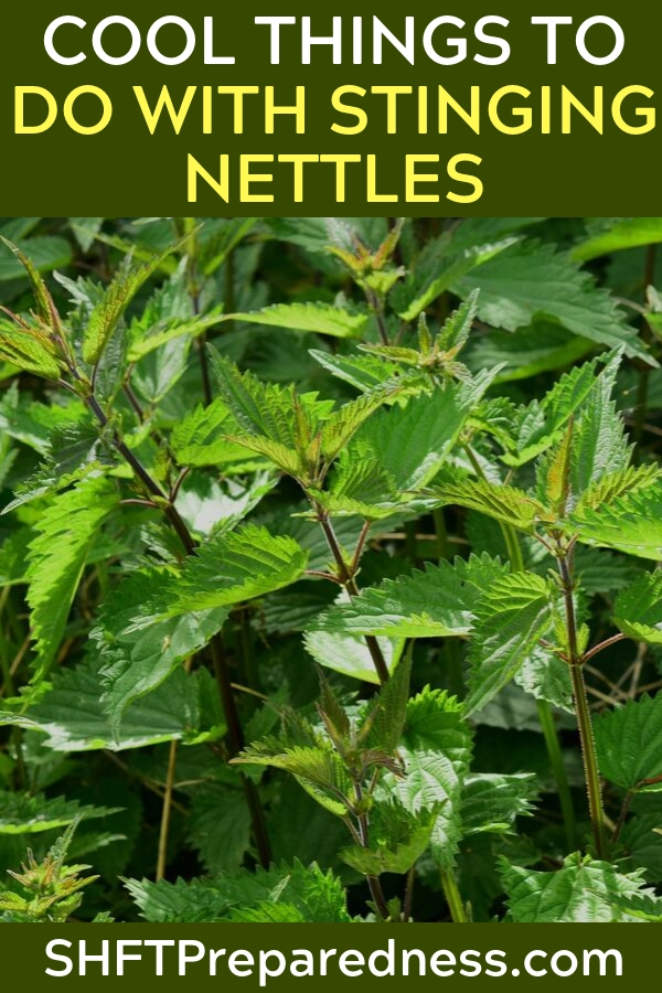 A Collection Of Cool Things To Do With Stinging Nettles — Stinging nettles have been around from the beginning of time, they hurt us a kid but these green wild plants can actually be very useful in the kitchen.