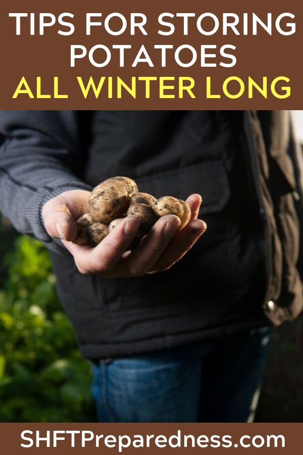 Tips for Storing Potatoes All Winter Long — When it comes to feeding your family from your own garden potatoes are King! I have read many sources that say you should be planting at least 1/3 of all your garden space to potatoes.