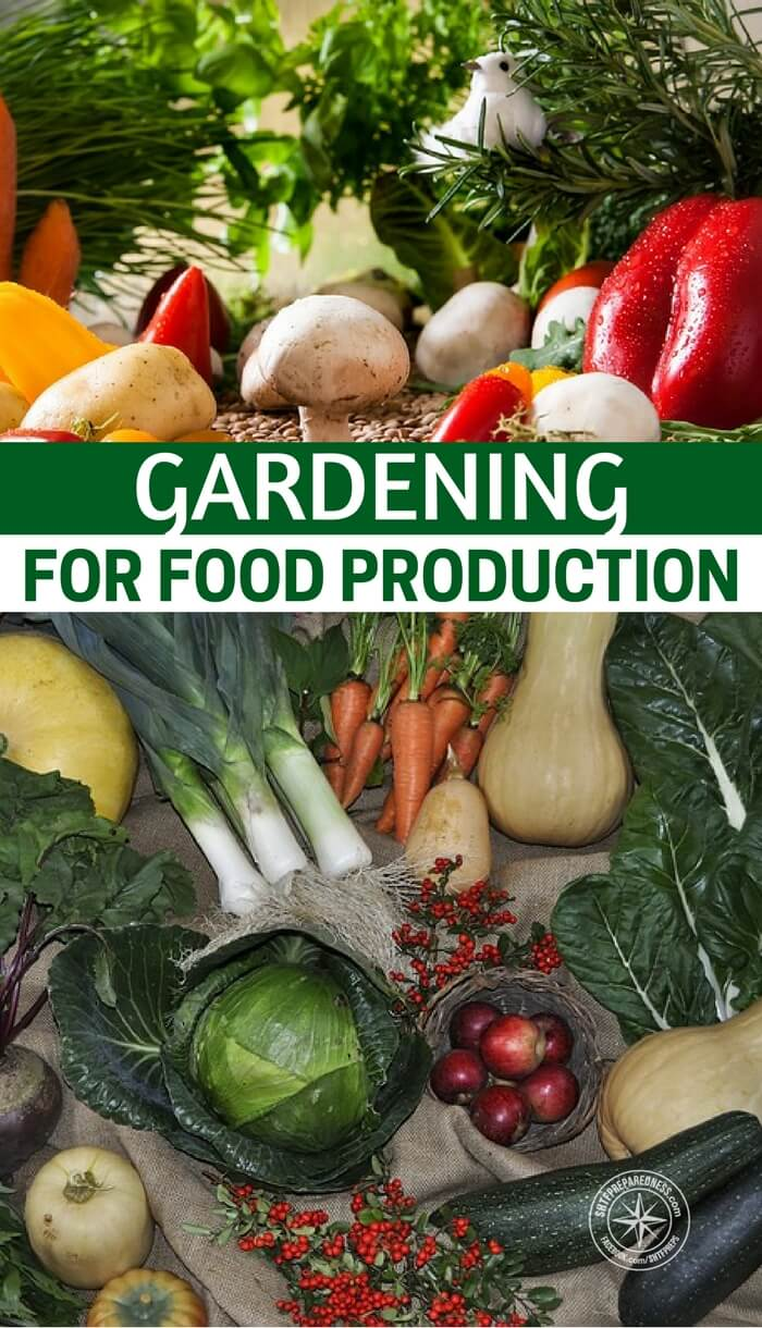 Gardening for Food Production - This article is a great look at gardening for food production. It sets the tone on what you need to be able to achieve these goals. Big or small your goals to produce more food should be part of your preps in 2018.
