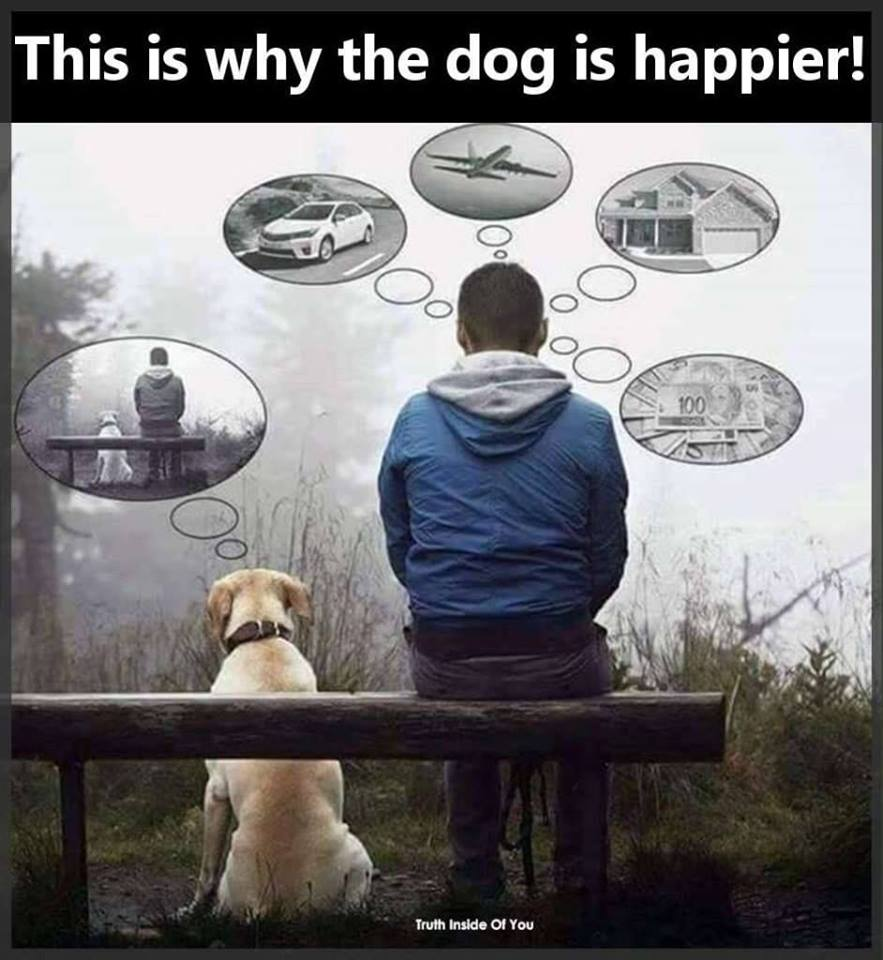 this is why the dog is happier