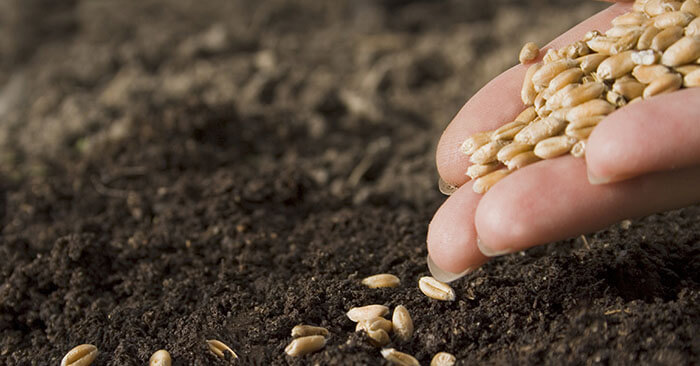 12 Seeds You Need To Start NOW For Spring Planting - This article will walk you through 12 types of seeds that can be planted now for the coming spring garden. You will find that there are a number of plants that you can get started right now and begin planning your garden.