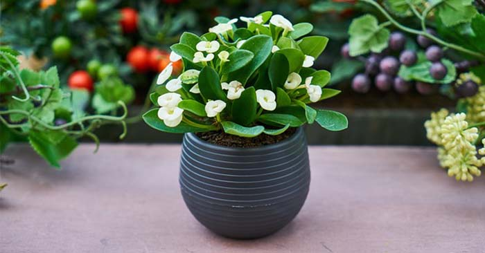 How To Create Perfect Potting Soil For Containers And Hanging Baskets