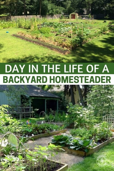 Day in the Life of a Backyard Homesteader - Sometimes your dreams can be fogged only the best parts. You may think that a life of picking vegetables would be a dream but what are the working hours and parts of a homesteaders day. If you are out there living the homesteading dream please offer up your routine as well. Give us a peek into the daily life of a homesteader.