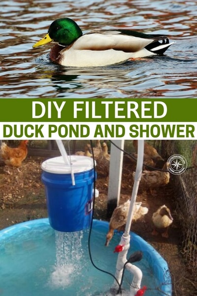 Diy filtered duck pond and shower for Duck pond filtration