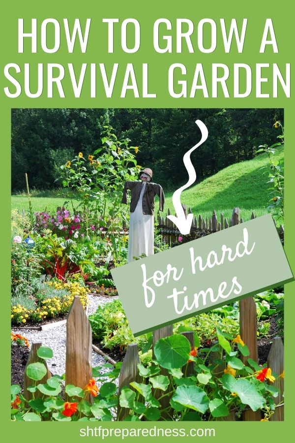 A guide of how to start a survival garden that will feed your family even when disaster strikes.