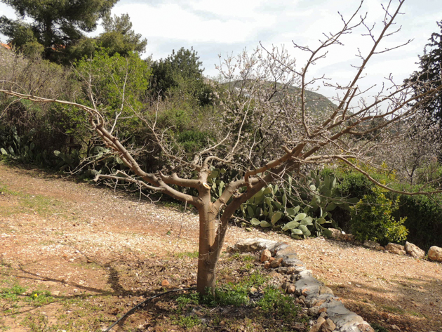 How to Prune Fruit Trees - Pruning sounds kinda scary, if you haven't done it before. I promise you, once you make your way through your first prune you will realize its not so bad. In fact, it can be pretty meditative.