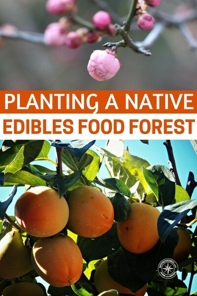 Planting a Native Edibles Food Forest - This article breaks down exactly what they planted and how much of it. It also talks about a very interesting way of getting these plants and trees in a way that might get the gears going in your own head.
