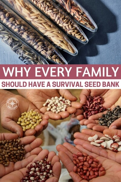 Why Every Family Should Have a Survival Seed Bank - Gardening is a booming industry and I think people are seeing the benefits to having these survival seeds around. Don't forget, a seedbank is not only food but its also one of the most effective bartering tools you can get your hands on. You would be a fool not to store one of these for the unknown future.