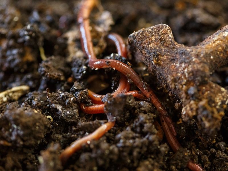 Garden soil with worms