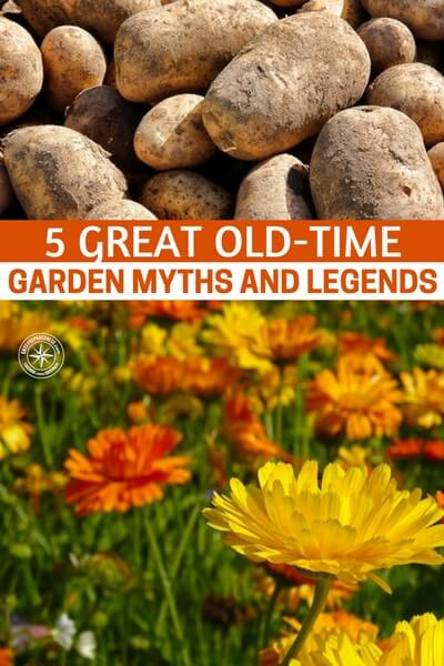 5 Great Old-Time Garden Myths And Legends – True or False? - This article features 5 of those old time garden myths and legends. It comes from a source that is one of the very best, when it comes to gardening. Self sufficiency through gardening is such an important part of prepping and survival.