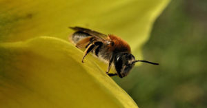 61 Plants That Attract Honeybees - This article will give you a quality resource for the 61 plants that attract honey bees. If bees are gathering pollen they are enjoying themselves and more than likely helping upkeep a healthy hive. That is what we are looking to accomplish.