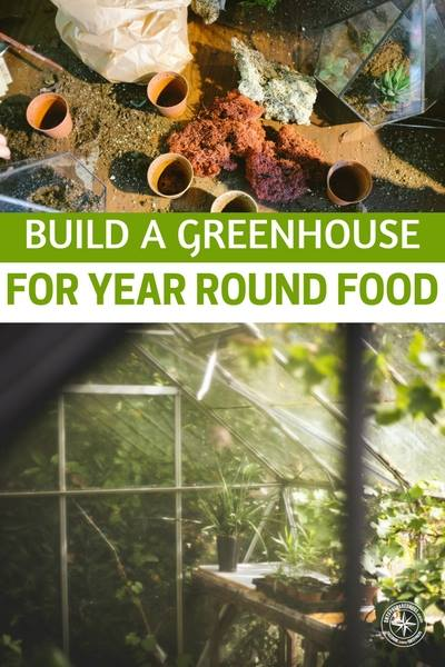 Build A Greenhouse This Spring For Year Round Food -- If you love fresh vegetables, a backyard greenhouse is a must! It doesn't need to be huge and complicated: just build a greenhouse that is good for your family.