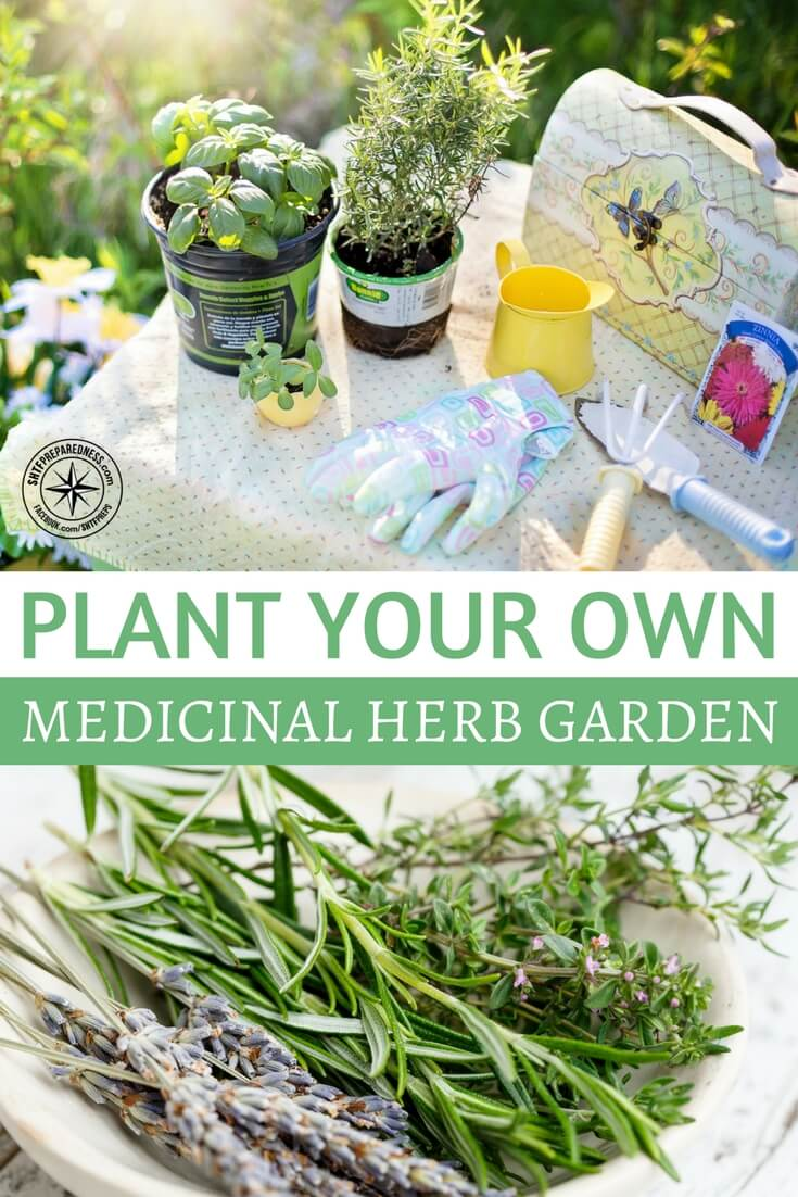 """Plant Your Own Medicinal Herb Garden — When did modern medicine replace herbal remedies in mass consciousness? When is it that the majority began seeking wellness from a bottle instead of food anmedicinal herb garden or a walk in the woods? Well it turns out that """"pills"""" have been around since ancient Egypt, where herbal concoctions would be rolled up into little balls in substances like dough and honey to make a convenient """"pill"""" for taking your medicine."""