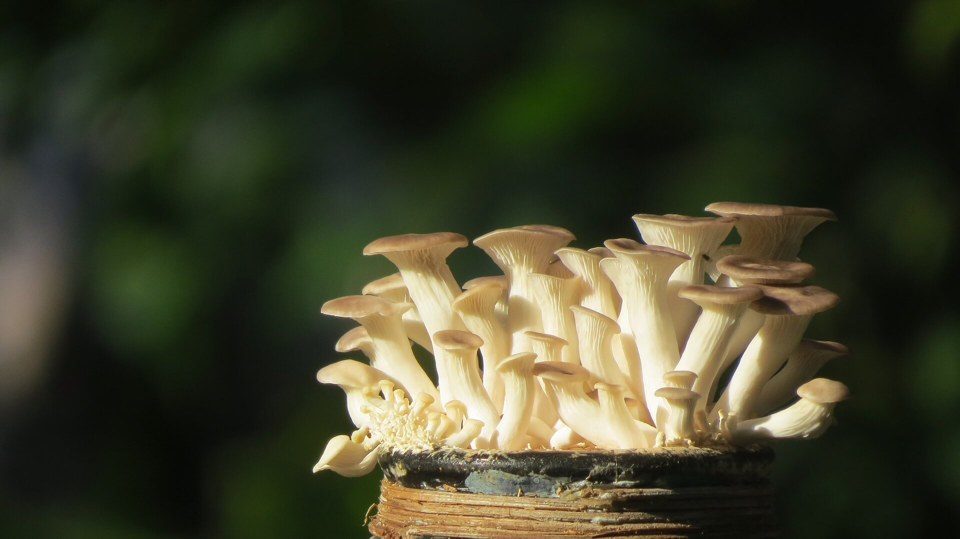 Start a Mushroom Farming Business at Home -- If you like mushrooms and you're interested in earning money from growing things, you might consider a mushroom farming business. Specialty mushroom growers are sprouting up all over, and can be a great home based business to start as a side hustle.