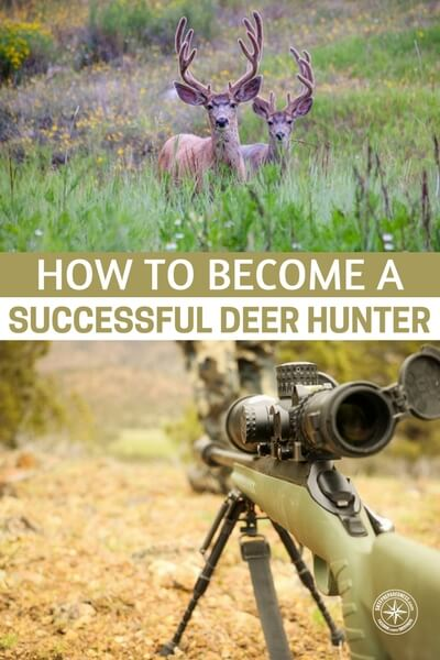 How To Become A Successful Deer Hunter - Once you get yourself suited up and go after a deer you will find that these deer start to disappear. They can hear you, smell you and get away from you despite some of your best efforts. One deer can take care of meat needs for quite some time. If you get a couple big deer you might be good on meat for the year. That is the allure in hunting these animals.