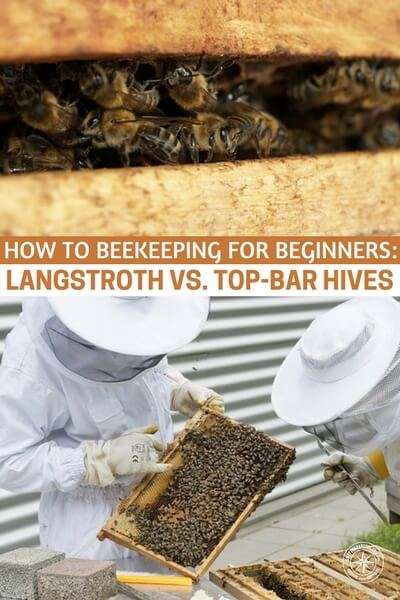 How to Beekeeping for Beginners: Langstroth Vs. Top-Bar Hives - This is a look at beekeeping fro the perspective of beginners. There are two systems that will be explored in this article and they are by no means the only method but they are two of the best. I think you will enjoy this one if you are looking to make a change or if you are looking to get your feet wet in beekeeping.