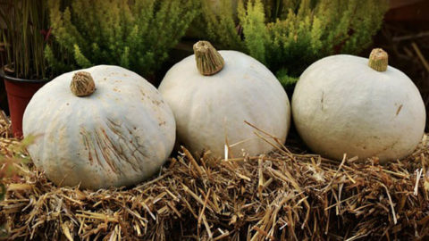 Pros and Cons to Straw Bale Gardening