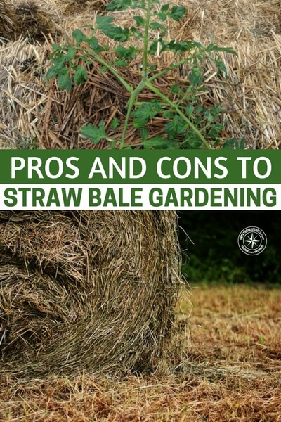 Pros and Cons to Straw Bale Gardening - There are many reasons to try straw bale gardening. Chances are you're reading this now because you either already know why you want to try it, or because you're wondering if it's a good solution for your circumstance.