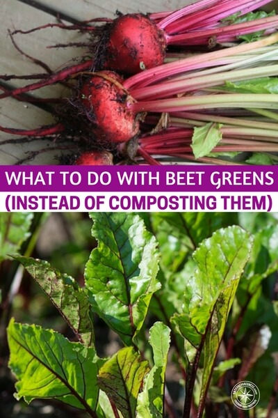 What to do With Beet Greens (Instead of Composting Them) - What do you do with those beet tops? Many people cut them off and throw them into the trash. This article is going to give you the best things you can do with beet tops . There are ways to turn these little leaves into something nice and tasty. You just need to learn the techniques.