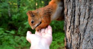 Four Tactics for Hardcore Squirrel Hunters - This article is a collection of four tactics that can really change the way that you are working towards the goal of shootings some squirrels. Bring them home and take advantage of the meat and fur.