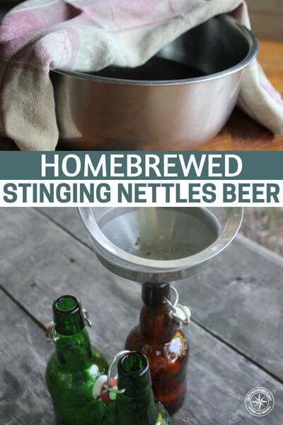 Homebrewed Stinging Nettles Beer - This article is not only about home brew but it is also about brewing beer using nettles. This is something that is really appealing because you have the ability to forage for your flavor.