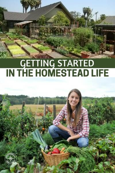 Getting Started in the Homestead Life - If you're stopping by to read this, chances are you've considered—or maybe already are—living the homestead life. While we aren't yet homesteaders ourselves,we've talked with homesteaders over the years and are steadily heading in the direction of self sufficiency ourselves.