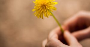 How to Make Dandelion Wine, Step by Step - This is a step by step  process on how to make your own dandelion wine. The is a start to finish article with all of the tools and techniques included as well. It may take time but you will have everything you need to get there.