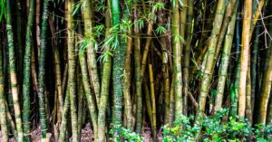 My Simple Bamboo Platform - This article features a great raw material. Bamboo is prolific and tremendously strong. When you read this article you will see that there are many ways that you can transform nature into the things you need.