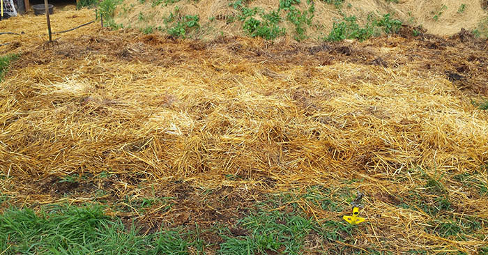 No Work Gardening - Ruth Stout Method - Her method is simple: sow your seeds on top of the soil, spread a thin layer of soil on top of them and then cover your garden area with a thick layer of mulch (she used mainly spoiled straw) and enjoy a healthy crop of vegetables and herbs.