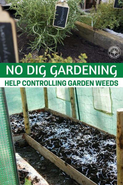 No Dig Gardening - Help Controlling Garden Weeds -- Have you ever been away from home (or just too busy to get to your garden) for a week, and came home to a weed garden that hid your veggie garden? This happened to us several times, and it's such a pain to catch up with weeding! you might even be inclined to just give up on your garden.