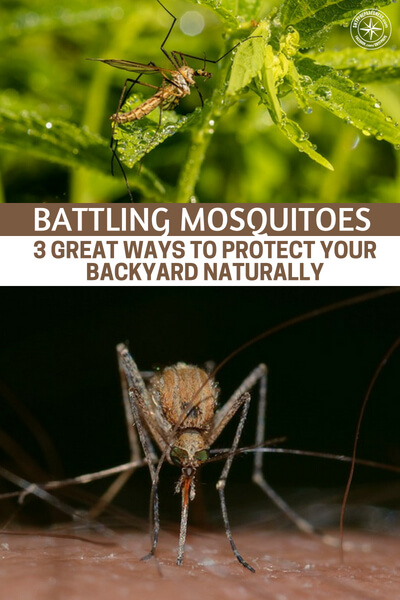 Battling Mosquitoes – 3 Great Ways To Protect Your Backyard Naturally - This is an article that offers 3 great ways to protect your backyard naturally. From here you will be able to make a difference in the struggle that against those nasty summer biters. While there are many more methods out there, these three can be incredibly effective.