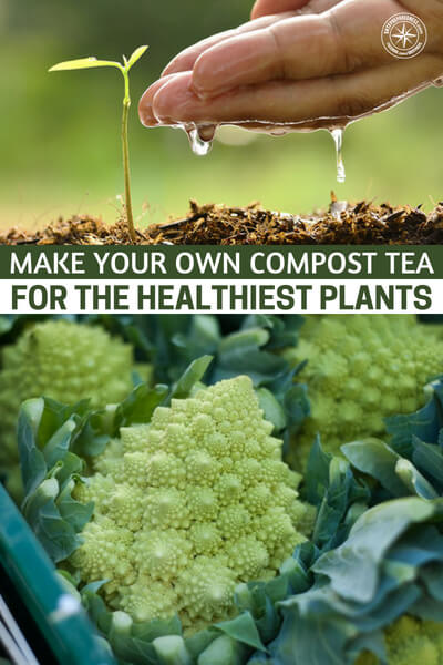 Make Your Own Compost Tea for the Healthiest Plants - Solid matter compost takes a while to break down in the soil and become available to plants.  but make up a compost tea and it has readily available nutrients your plants can start using right away.