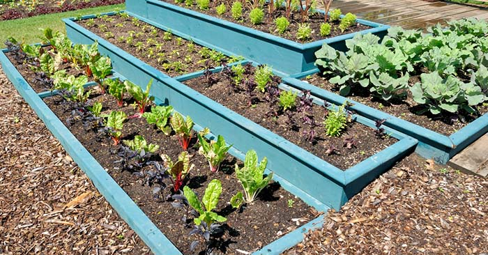 Free Garden Plans - Once you make a list of your favorite fruits, veggies and herbs, draw up a plan to make planting easier on yourself.