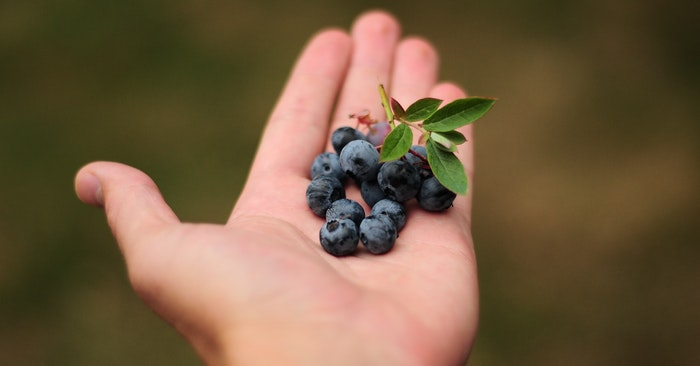 Growing Blueberries Quick Tips - Once you get these delicious berries rolling and the bushes proliferating they can be pretty effective producers. They certainly do better in the colder climates and it seems that they need some help with the uptake of nutrients.