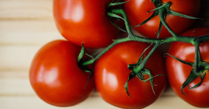 How and When to Plant Tomatoes in the Garden - When you reach that point its time to start canning. Tomatoes can take a toll on your garden but if you get them right and keep your soil full of nutrients you will get plants that offer a lot to harvest.