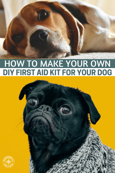 How to Make Your Own DIY First Aid Kit for Your Dog - Every once in a while, you should check your dog's first aid kit, just in case something is missing or should be replaced, such as expired medication. You have to be ready at all time, so make sure to thoroughly go through the kit!