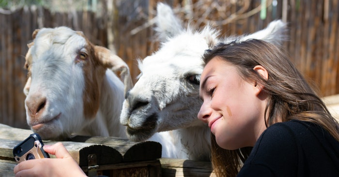 The Truth About Keeping Backyard Goats - Here is an article about the truth on keeping backyard goats. What I love about this article is that it really is the truth. You wont find any fluffy nonsense about all the joys of goat keeping.