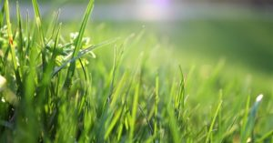 Turning our Lawn into Pasture - This is an article about putting that space to use. I think you are going to like this one. While the recommendation is not about growing food in your front yard, not a bad idea though.