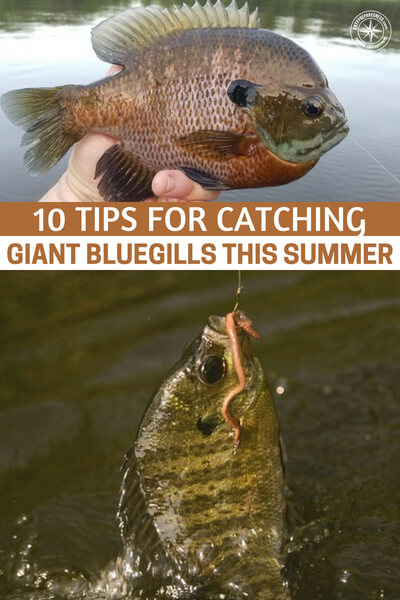 10 Tips for Catching Giant Bluegills This Summer - This article will teach you 10 tips for catching giant bluegills in the summer. Never understate that skill that you may have learned back on those old county roads.
