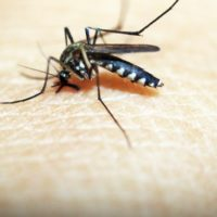3 Homemade Mosquito Traps That Are Dirt-Cheap - This is an article about 3 homemade mosquito traps that are dirt cheap. These are very important, not just for you today but also for the days to come.