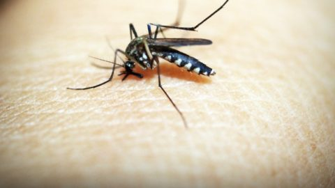 3 Homemade Mosquito Traps That Are Dirt-Cheap