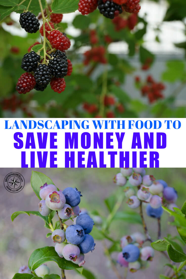 Landscaping With Food To Save Money And Live Healthier -- It's easy to go crazy buying flowers and shrubs to add beauty to your landscape. Curb appeal is important, especially if you're planning to sell your home.  But by landscaping with food you can have a bit of both worlds: a beautiful lawn and food for the family.