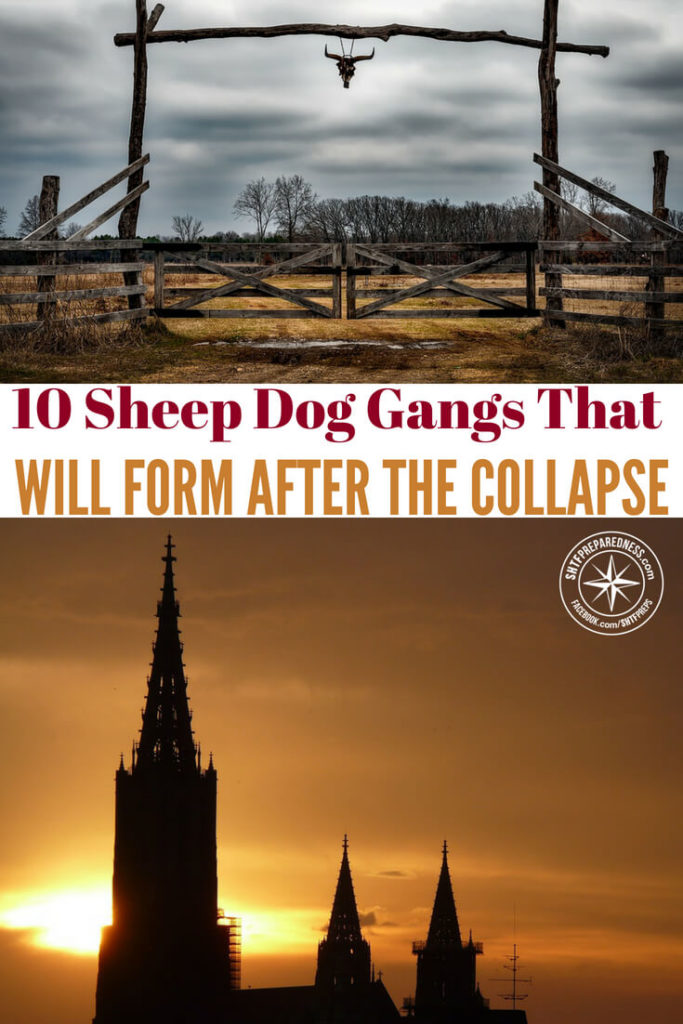 10 Sheep Dog Gangs That Will Form After The Collapse- Do we put too much emphasis on the fact that the bad guys will run wild after a collapse? Is it silly to assume that everyone will turn to the dark side once things get bad out there? For many its all speculation.