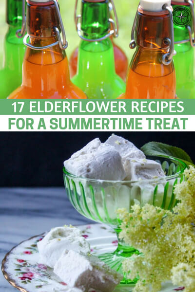 17 Elderflower Recipes for a Summertime Treat - This article is about the humble elderflower and the various types of recipes you can use it for. You see the berries are not a favorite snack of many but they can make a great jam.