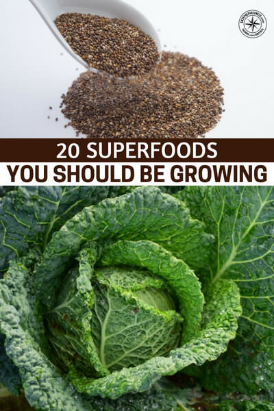 20 Superfoods You Should Be Growing - This is a great article about how you can grow superfoods in your garden and which ones you should be growing in your backyard. Its very important for you to understand just how much the food you put into your body affects you.